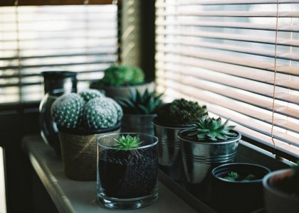 Trendy Houseplants to Complement New Furniture
